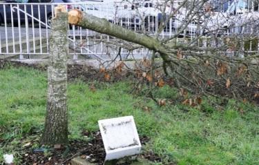 Vannes : l'arbre de la laïcité abattu ne sera pas remplacé